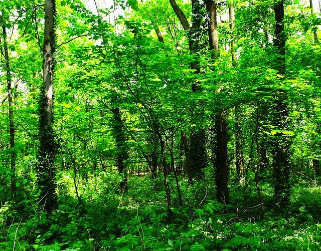 verde-nel-bosco