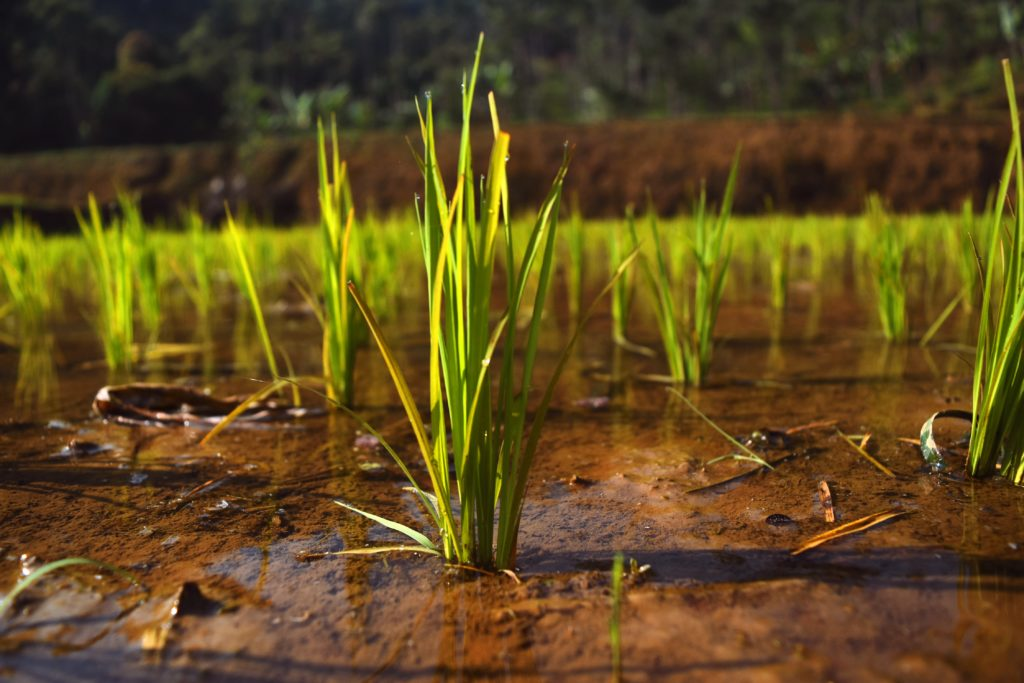 le-piante crescono-dal-terreno