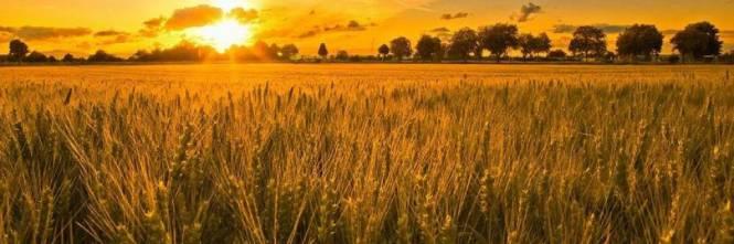 campi-di-grano